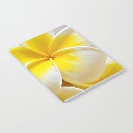 Plumeria Blossoms Notebook