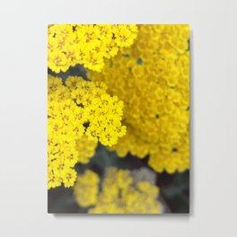 Cellular - Fern Leaf Yarrow Metal Print