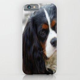 King Charles Cavalier Portrait iPhone Case