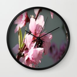 Unidentified Winged Insect On Peach Tree Blossom Wall Clock