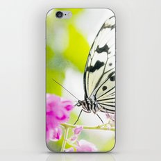White Butterfly iPhone & iPod Skin