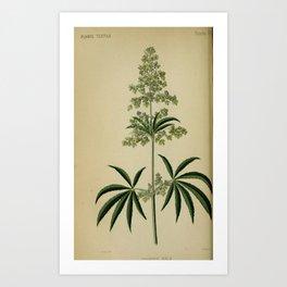 Flower Hemp canabis sativa6 Art Print