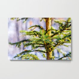 Christmas Tree Raises In The Forest Metal Print