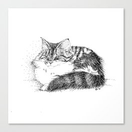 Maine Coon Cat - Pen and Ink Canvas Print