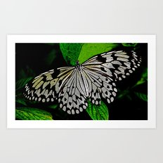 LACE -WINGED Art Print