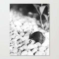 Rock Bottom Canvas Print