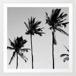 cocotier noir Art Print