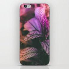 Violet Ladder iPhone & iPod Skin