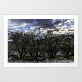 Trees in the morning Art Print