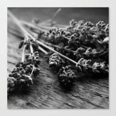 Lavender No. 2 (Black & White) Canvas Print