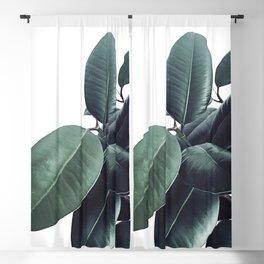 Ficus Elastica #13 #decor #art #society6 Blackout Curtain