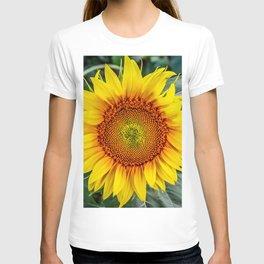 Solo Sunflower T-shirt