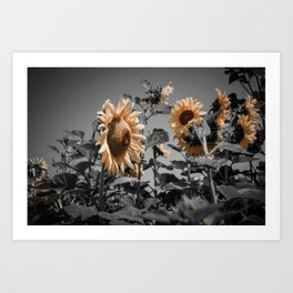 Sunflowers On My Mind Art Print