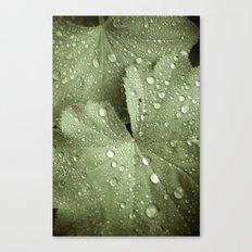 Sunshower Canvas Canvas Print