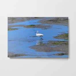 egret in brown and blue Metal Print