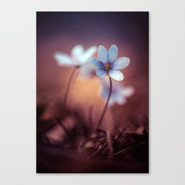 Liverworts Canvas Print