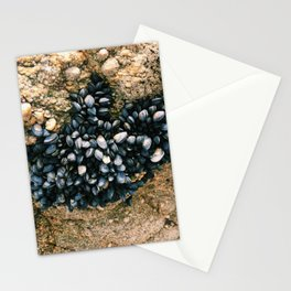 le pouliguen mussels on rock photograph Stationery Cards