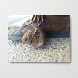 Little Cottontail Metal Print