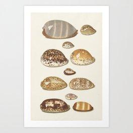 Vintage Seashell Chart II Art Print