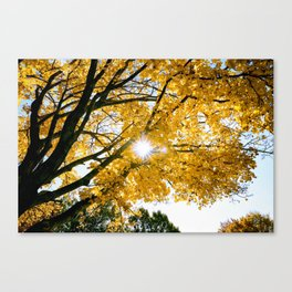 Fall Sunshine Canvas Print
