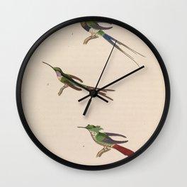 Black bellied Thorntail Festive Coquette trochilus enicurus3 Wall Clock