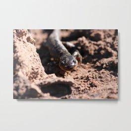 Tiger Salamander Metal Print