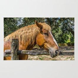 Brown Horse Rug