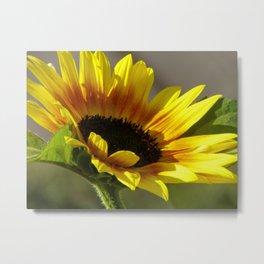 Sweet Sunflower Metal Print