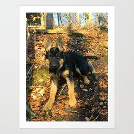 A beautiful German Shepherd in the forest Art Print