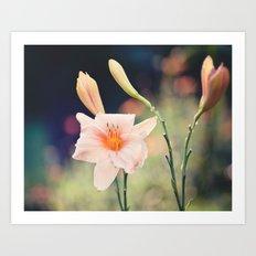 Pink Daylily Art Print