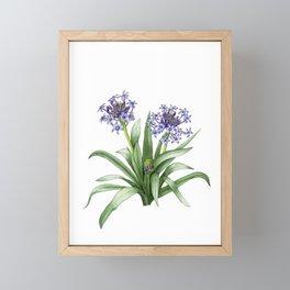 Peruvian Lily Framed Mini Art Print