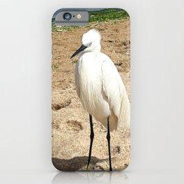 A friendly Heron on the beach iPhone Case