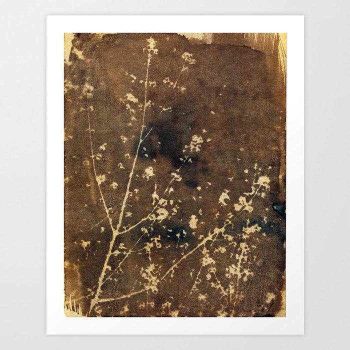 Toned Garden Cyanatope Print Art Print