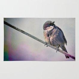 A New York City Sparrow Rug
