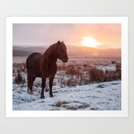 Mountain Horse Art Print