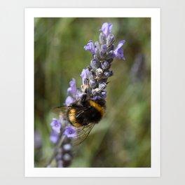 Bee & Lavender Art Print