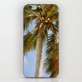 Palm Tree in Cuba iPhone Skin