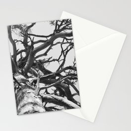 Pinewood Stationery Cards