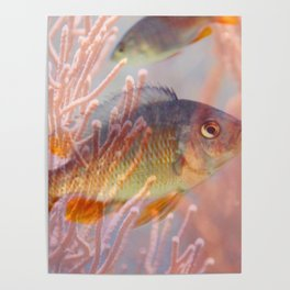 Love is a Fish Poster