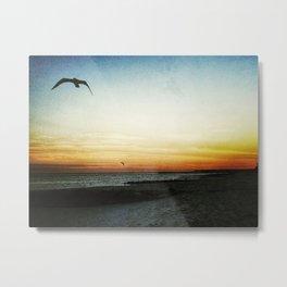 sea gull in flight Metal Print
