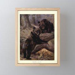 Finn - The Wild Beasts of the World (1909) - Vol 1 Plate 37 Brown Bears Framed Mini Art Print