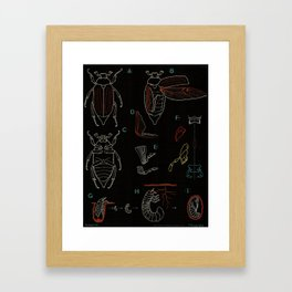 Paul Sougy: The Beetle, 1953 (proceeds benefit The Nature Conservancy) Framed Art Print