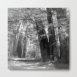 Walking Through The Muir Woods Metal Print