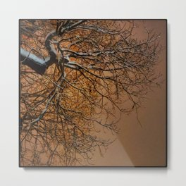 Snowy Tree Silhouette Reaching into the Orange Sky Metal Print