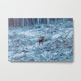 Fallow deer buck snow forest landscape (Dama Dama) Metal Print
