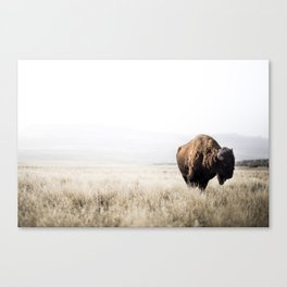 Bison stance Canvas Print