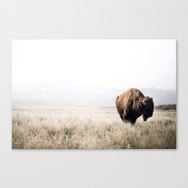 Bison stance Canvas Print