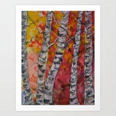 Fall Birch Trees Art Print