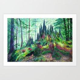 Forest in Transition - Cedar Stump Art Print