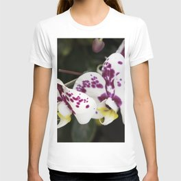 Longwood Gardens Orchid Extravaganza 24 T-shirt